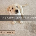 How to Get Urine Smell Out of Carpet - Top 8 Ways