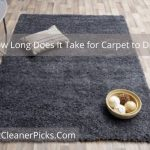 How Long Does It Take for Carpet to Dry - Complete Guide