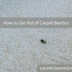 How to Get Rid of Carpet Beetles - 6 Simple Methods